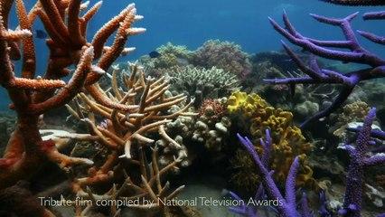 James Honeyborne Honored as Scuba Diving's Sept/Oct Sea Hero