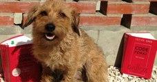 Bientôt une loi pour punir les propriétaires qui abandonnent leurs animaux ?
