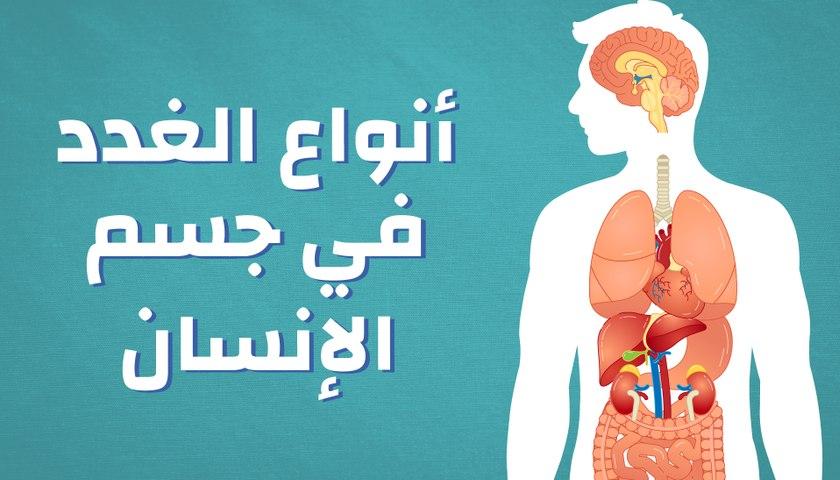 أنواع الغدد في جسم الإنسان