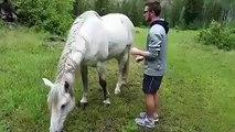 Un homme essaye de monter sur un cheval ! LOL