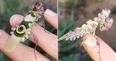 Cet insecte au camouflage bluffant semble provenir d'un monde imaginaire et pourtant, il existe vraiment !