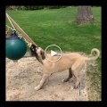 MALAKLI COBAN KOPEGi SABAH SPORU - ANATOLiAN SHEPHERD DOG MALAKLI MORNiNG EXERCiSE