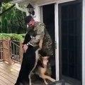 Ces chiens souhaitent la bienvenue à leur Maitre un soldat de l'armée américaine. Ils aboient et remuent la queue comme des malades, quel accueil chaleureux !