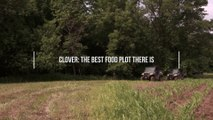 Why Clover Is the Best Food Plot You Can Plant