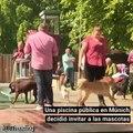 Acompañados por sus dueños, estos canes no desaprovecharon la oportunidad para darse un 'chapuzón'