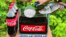 Experiment Fish vs Giant Mentos Put In Coca Cola