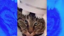 La vidéo hilarante de ce chat qui se fait masser la tête fait le tour du web !