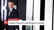 Joaquin Phoenix's Animals