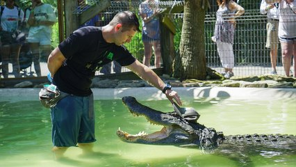 'Reptile King' Is Best Friends With Giant Gator