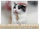Quel chat pourrait résister à du poisson grillé sec ? Un royal festin pour notre cher ami !