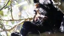 Seltenes Äffchen im Zoo in Sydney geboren