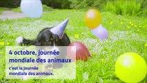 4 octobre : c'est la journée mondiale des animaux