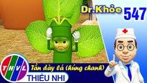 THVL | Dr. Khỏe - Tập 547: Tần dày lá (húng chanh)  – Phần 1