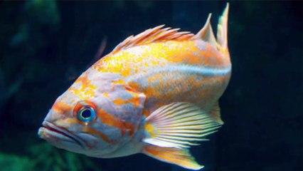 Características anatómicas de los peces