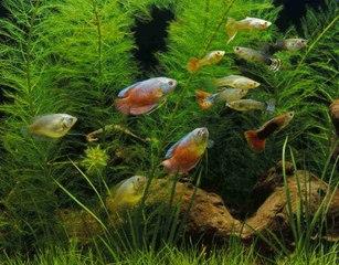 Todo lo que necesitas saber sobre los peces tropicales