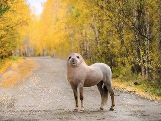 Seehund-Pony und Lama-Schwan: Das sind die skurrilsten Tierfotos