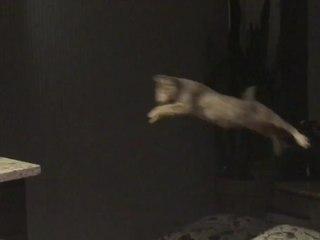 Ein Katzensprung: Savannah-Kätzchen lernt fliegen