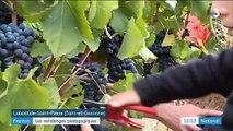 Viticulture : les vendanges pédagogiques attirent les curieux
