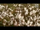 Monsanto Exits Cotton Seed Business