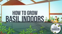 How to grow Basil Indoors | Kitchen Garden | Tofiq Pasha | Masala TV