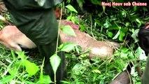 Yos Hav Zoo Tuas Npua Teb  Nyob Rau Sab Xam Kuab 2019
