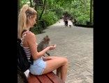 Une femme fait croire à un singe qu'elle a de la nourriture dans sa main !