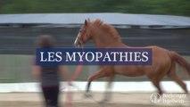 Les myopathies