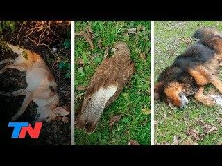 Misterio en Pilar: murieron más de 40 mascotas en 3 meses. ¿Las están envenenando?