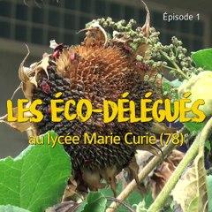 Épisode 1 : le développement durable au coeur du lycée Marie Curie à Versailles
