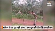 सैनिक ने किंग कोबरा पर किया दाे उंगलियों से काबू