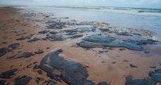 Au Brésil, 2000km de plages sont touchés par une marée de pétrole dont l'origine serait inconnue