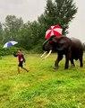 Irrésistible amitié : Cet éléphant aime son ami humain et l'imite à la perfection