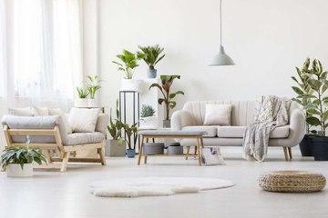 Die schönsten Zimmerpflanzen