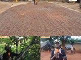 Côte d'Ivoire:  Le nouveau prix du cacao fixé par le gouvernement  critiqué par les producteurs