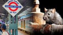 Rats Cost 6 Crores To Chennai Railway Division |Oneindia Kannada