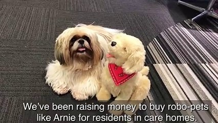 Robo-dogs are tackling loneliness in Lancashire's care homes