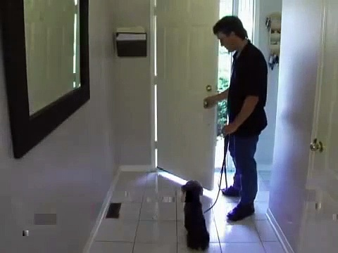 Alpha Paws – Dog Obedience Training