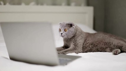 Research Suggests Cats Like Their Owners as Much as Dogs