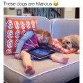 Diaporama rigolo de chien. les toutous sont les meilleurs !