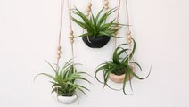 How to Make a Clay Air Plant Holder