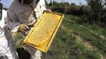Miel des Pyrenées | Production