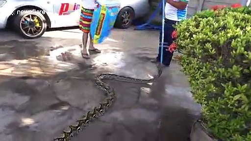 Python caught hiding in garage roof to 'escape angry dogs'