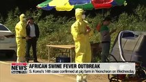 14th African swine fever confirmed in Yeoncheon on Wednesday, gov't discuss tighter quarantine measures