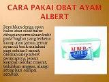WA O85-227-9O2O2O Diskon Besar - Besaran Harga Obat Kurap Tradisional Pada Ayam Aduan Bali