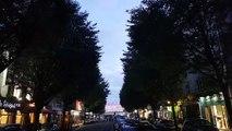 A Rennes, les étourneaux de l'avenue Jean Janvier se font entendre à la nuit tombée.