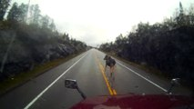Moose Walks Away After Being Hit by Truck