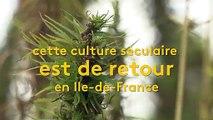 Île-de-France : le chanvre en plein boom