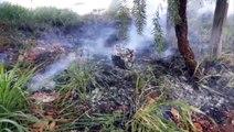 Fogo atinge vegetação no Bairro Floresta