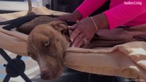 """A Month Later, Florida Rescue Group Finds """"Miracle"""" Dog Trapped Beneath Rubble of Hurricane Dorian"""