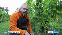 Suède : l'autre pays du vin